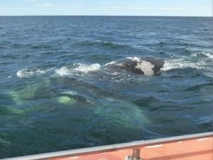 454. A avistar ballenas