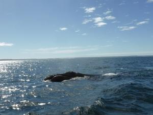 457. A avistar ballenas