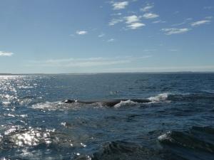 458. A avistar ballenas