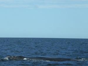 472. A avistar ballenas