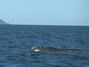 473. A avistar ballenas