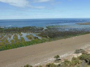 516. Por Península Valdés. Punta Norte