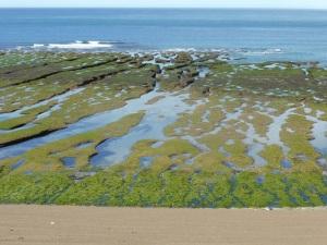 521. Por Península Valdés. Punta Norte