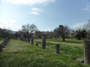 231. Olimpia. Gimnasio