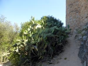 072. Castillo de Almourol