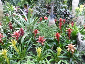 1237. Shangai. Jardín botánico
