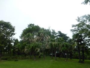 1241. Shangai. Jardín botánico