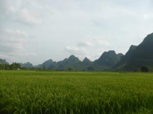 829. Yangshuo. Por los arrozales