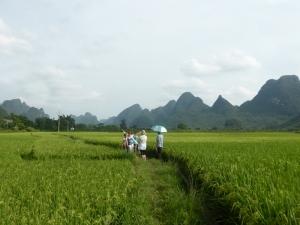 833. Yangshuo. Por los arrozales