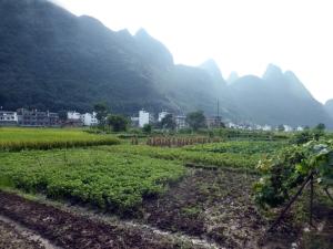 838. Yangshuo. Por los arrozales