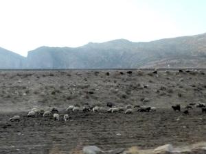 889. Hacia Shiraz