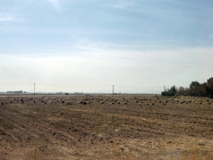 908. Hacia Persépolis