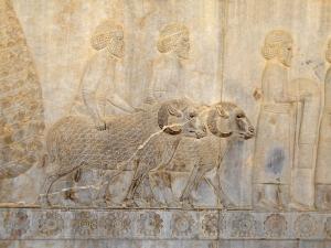 967. Persépolis. Relieves de la Apadana