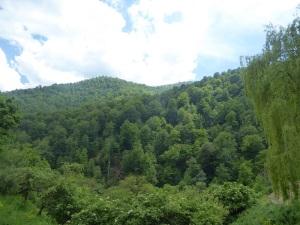 439. Subida al monasterio de Haghartsin