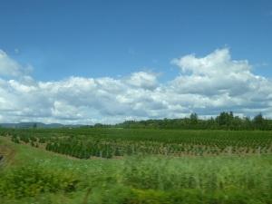 274. De Quebec hacia Trois Rivières
