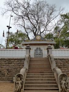 289-anuradhapura-arbol-bodhi