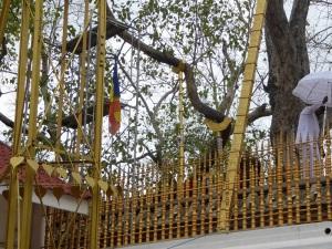 291-anuradhapura-arbol-bodhi