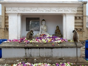 323-anuradhapura-rubanvelisaya-dagoba