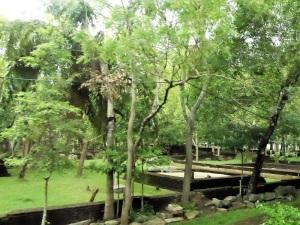 349-anuradhapura