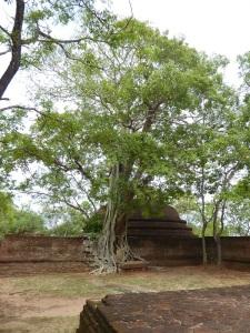 510-polonnaruwa