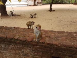 515-polonnaruwa