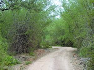 546-parque-nacional-de-minneriya
