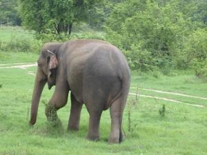 576-parque-nacional-de-minneriya-elefante