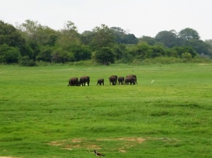 578-parque-nacional-de-minneriya-elefante