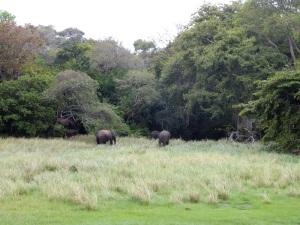 610-parque-nacional-de-minneriya-elefantes
