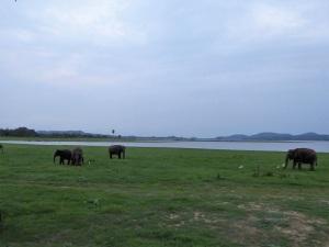 628-parque-nacional-de-minneriya-elefantes
