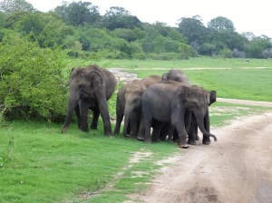 634-parque-nacional-de-minneriya-elefantes