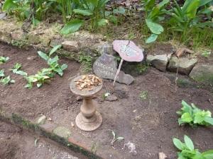 682-de-dambulla-a-matale-jardin-de-especias-curcuma