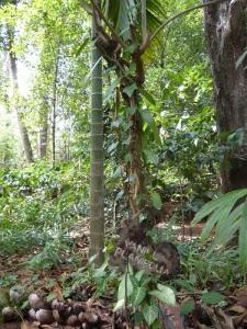 689-de-dambulla-a-matale-jardin-de-especias-vainilla