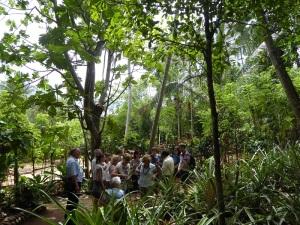 691-de-dambulla-a-matale-jardin-de-especias