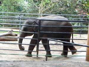 916-pinnewale-orfanato-de-elefantes
