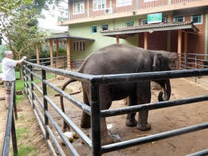 928-pinnewale-orfanato-de-elefantes