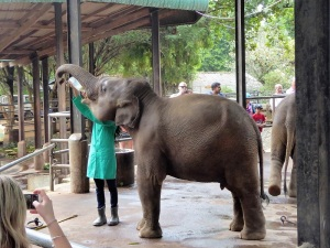 945-pinnewale-orfanato-de-elefantes