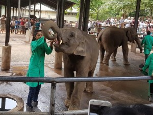 967-pinnewale-orfanato-de-elefantes