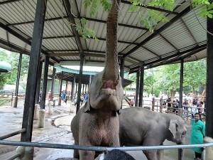 975-pinnewale-orfanato-de-elefantes