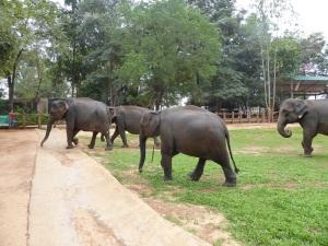 978-pinnewale-orfanato-de-elefantes
