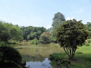 1067-peradeniya-jardin-botanico-real