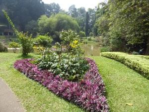 1079-peradeniya-jardin-botanico-real