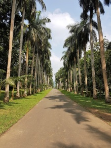 1088-peradeniya-jardin-botanico-real