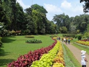 1098-peradeniya-jardin-botanico-real