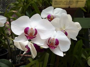 1113-peradeniya-jardin-botanico-real