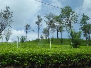 1122-de-kandy-a-nuwara-eliya-plantaciones-de-te