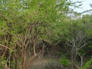 1276-parque-nacional-de-yala
