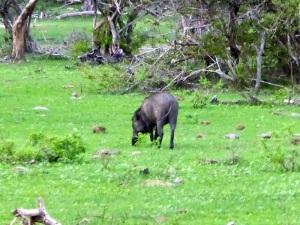 1315-parque-nacional-de-yala-jabali