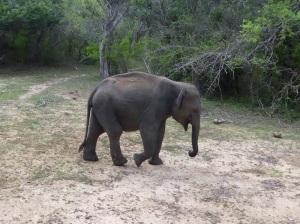 1327-parque-nacional-de-yala-elefantes