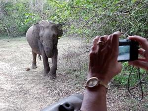 1330-parque-nacional-de-yala-elefantes